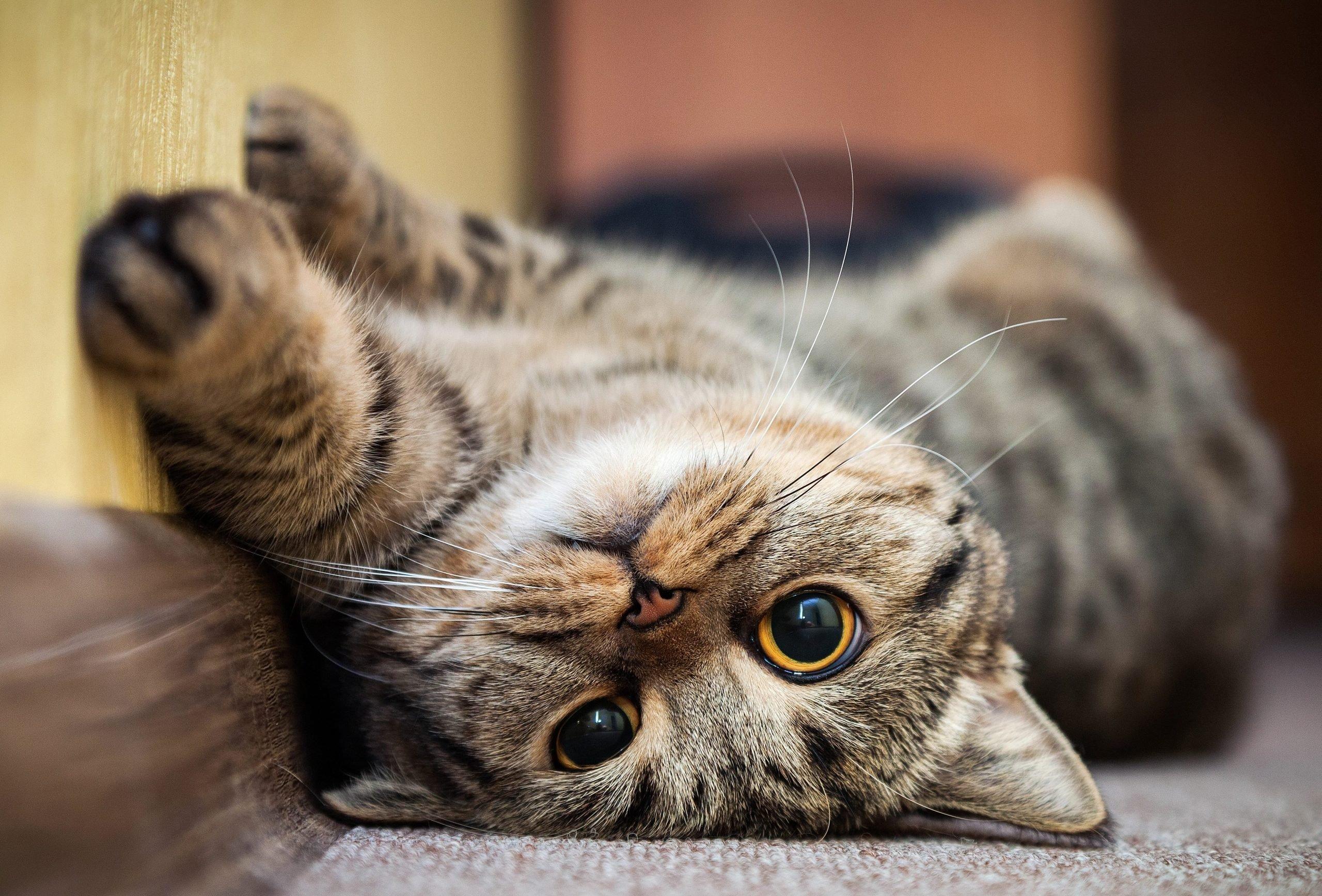 Cattitude vzw voor zwerfkatten